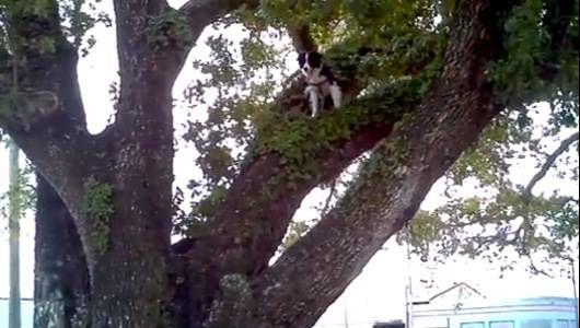 6 videos de perros trepadores