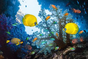 Tropical fish swim around a coral reef.