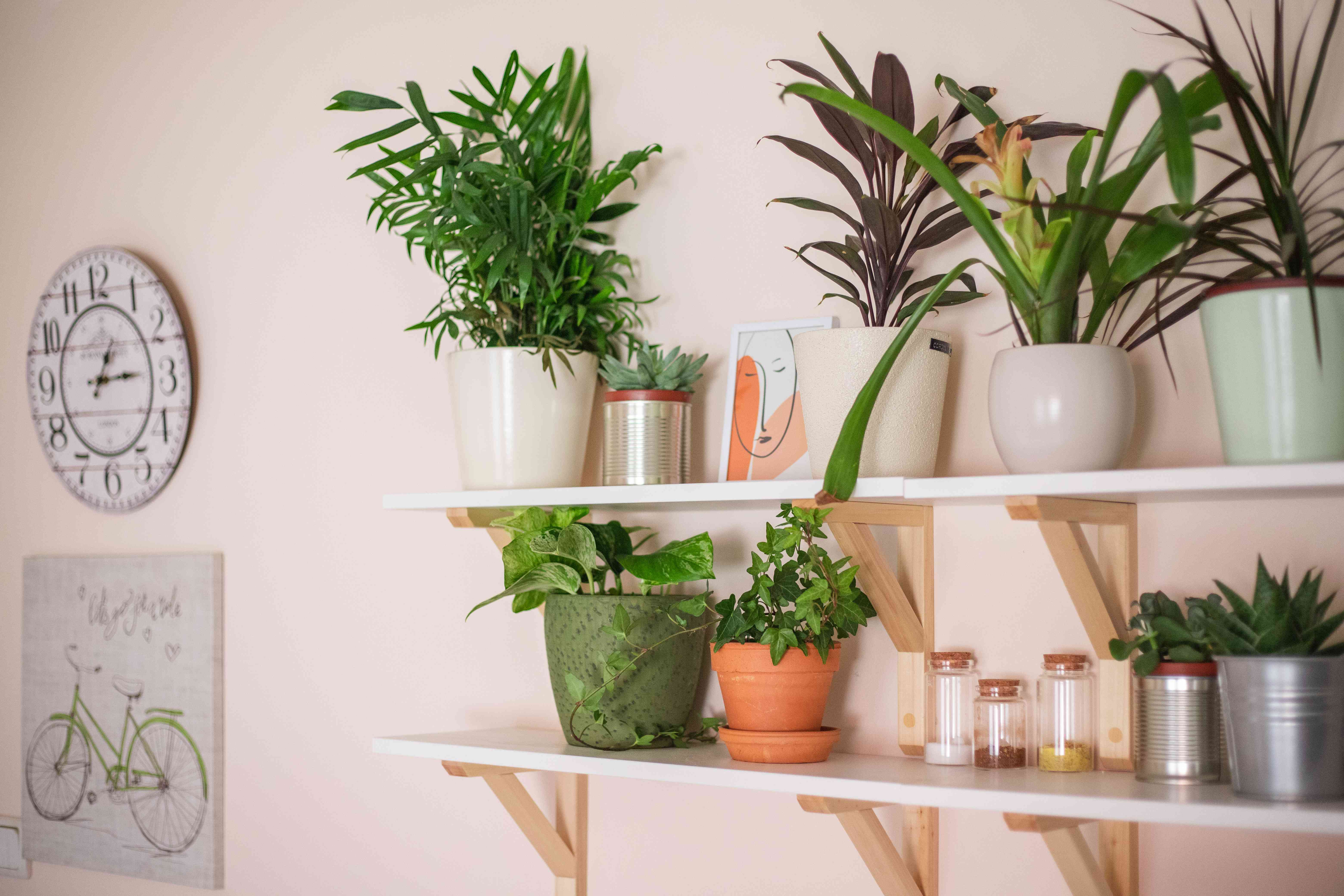 floating shelves filled with assortment of house plants, art, and dry goods