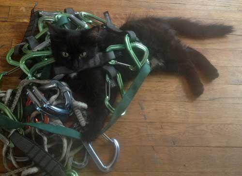 Millie as a kitten