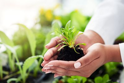 80% of the world's population relies on plant