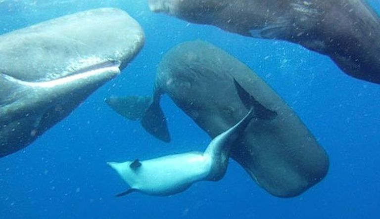 dolphin with whales photo