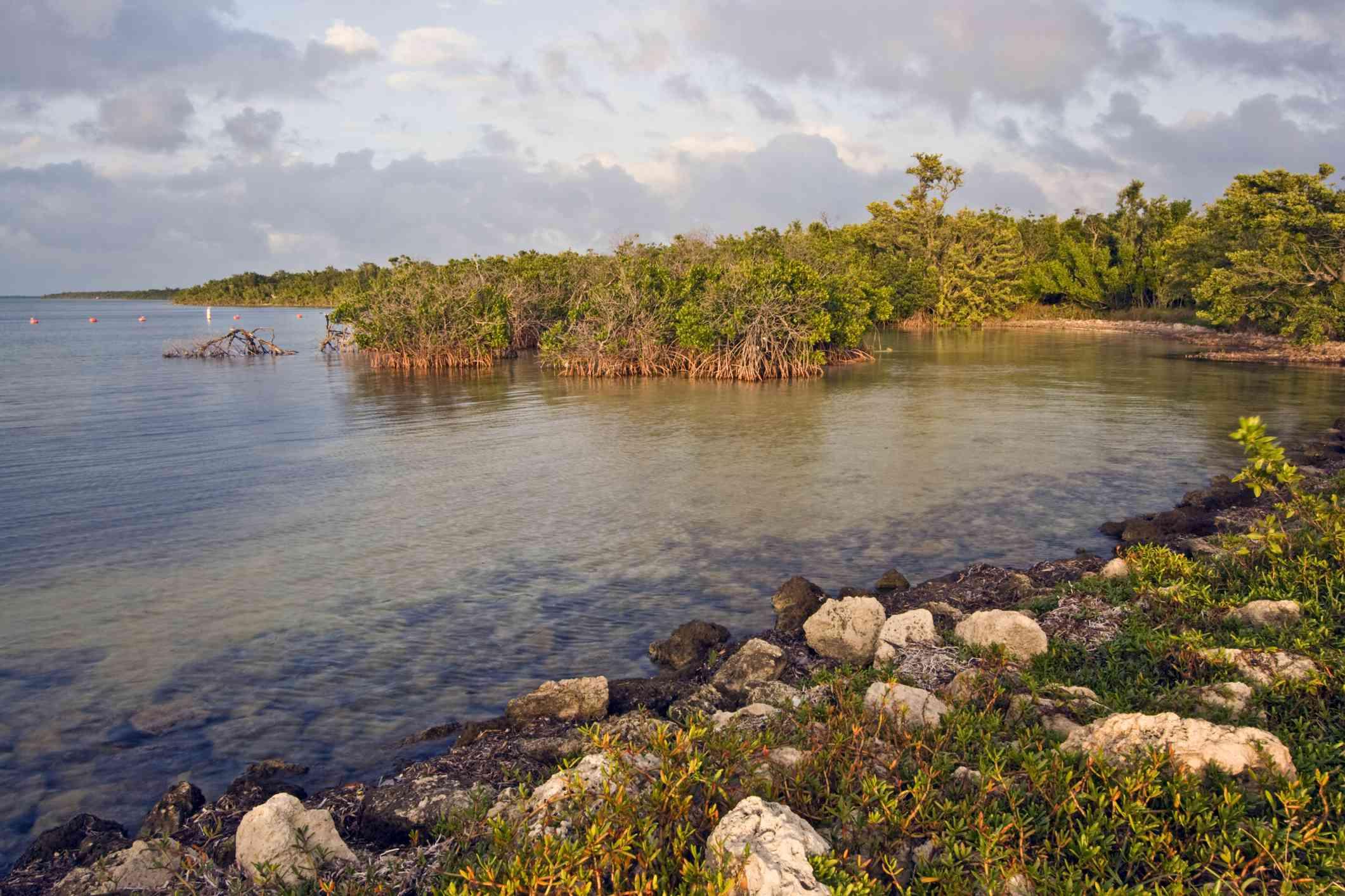Mangroves in Biscayne National Park