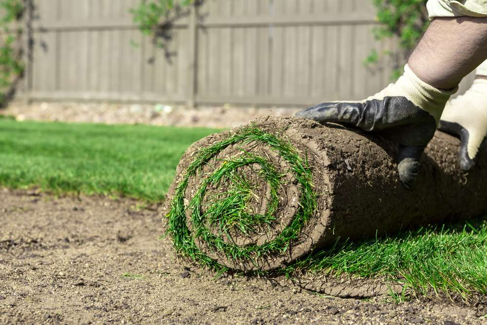 roll of grass on ground