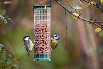 Birds eating from a bird feeder