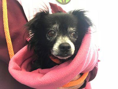 Dog bundled in a blanket.