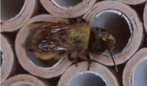 honey bee investigation bamboo rods