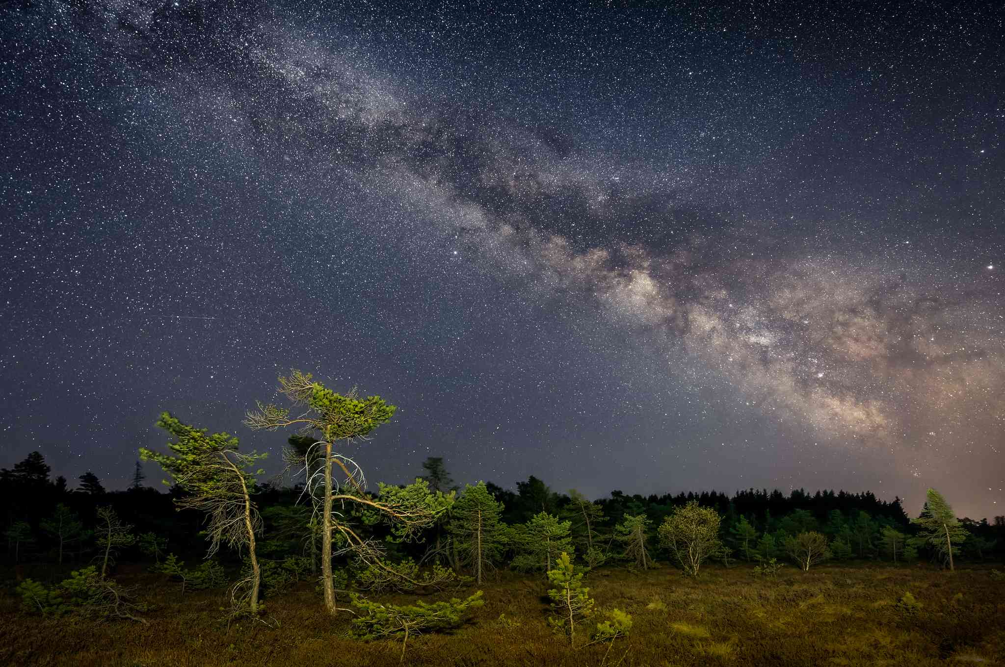 Milky Way sprawling over evergreen forest at night