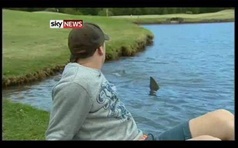 bull shark golf course photo
