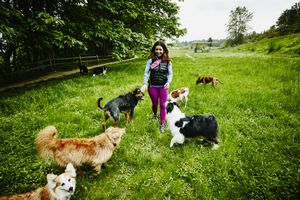 Female dog walker walking dogs through park