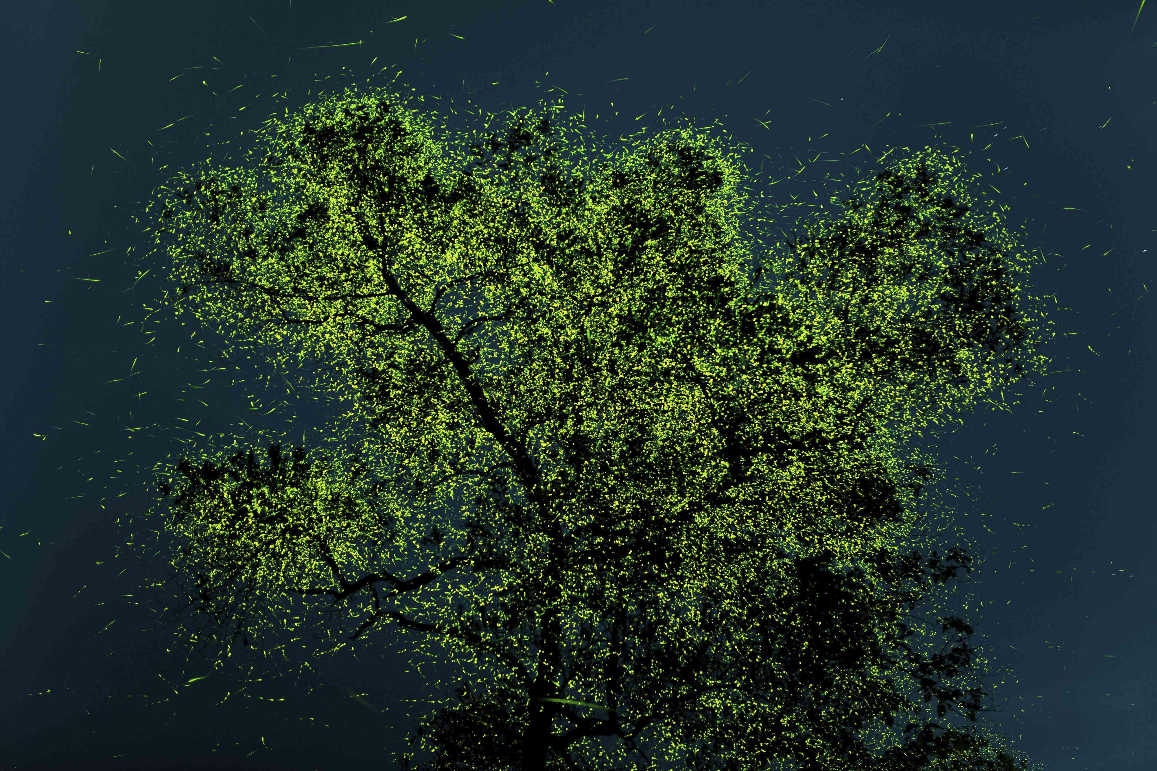 fireflies on tree