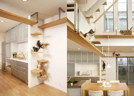 house for cats photo