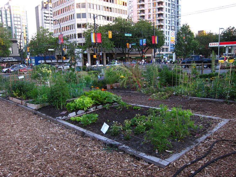 Urban garden with multiple plots