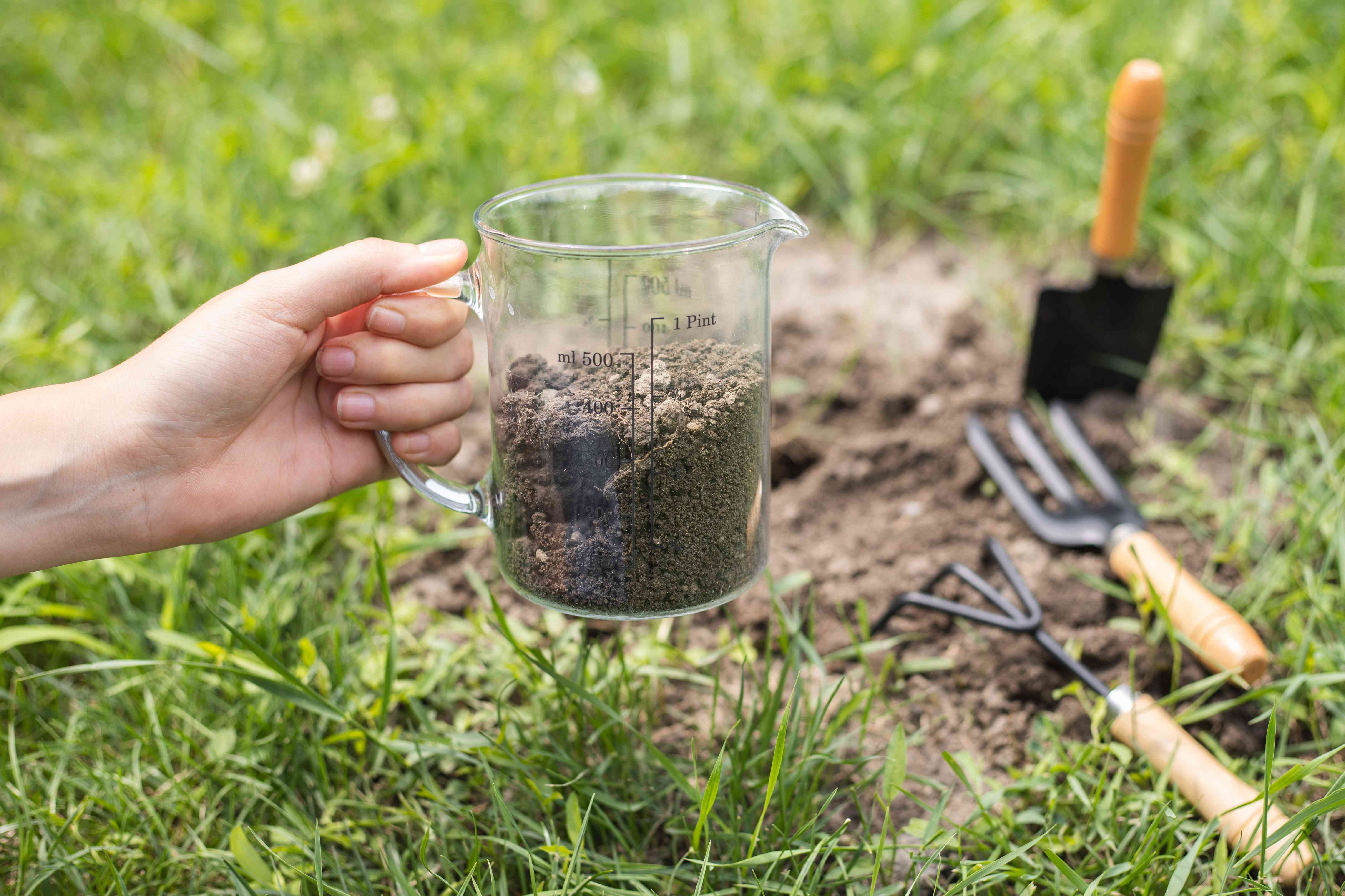 hand holds out glass measuring cup holding cup of freshly dug dirt in garden