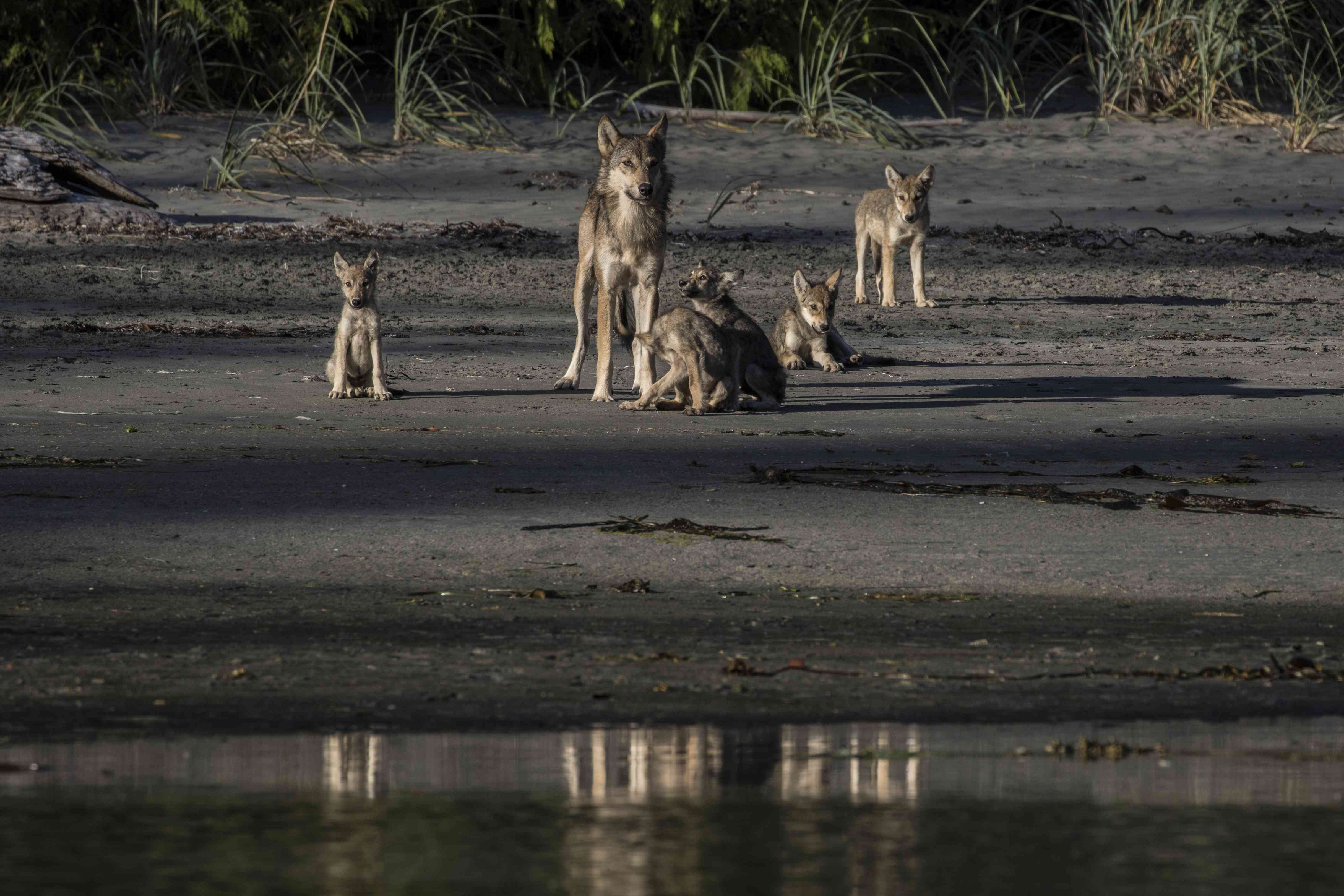 A mother and pups on the beach is a rare sight for anyone, and these photographers put in their dues to be able to witness it.