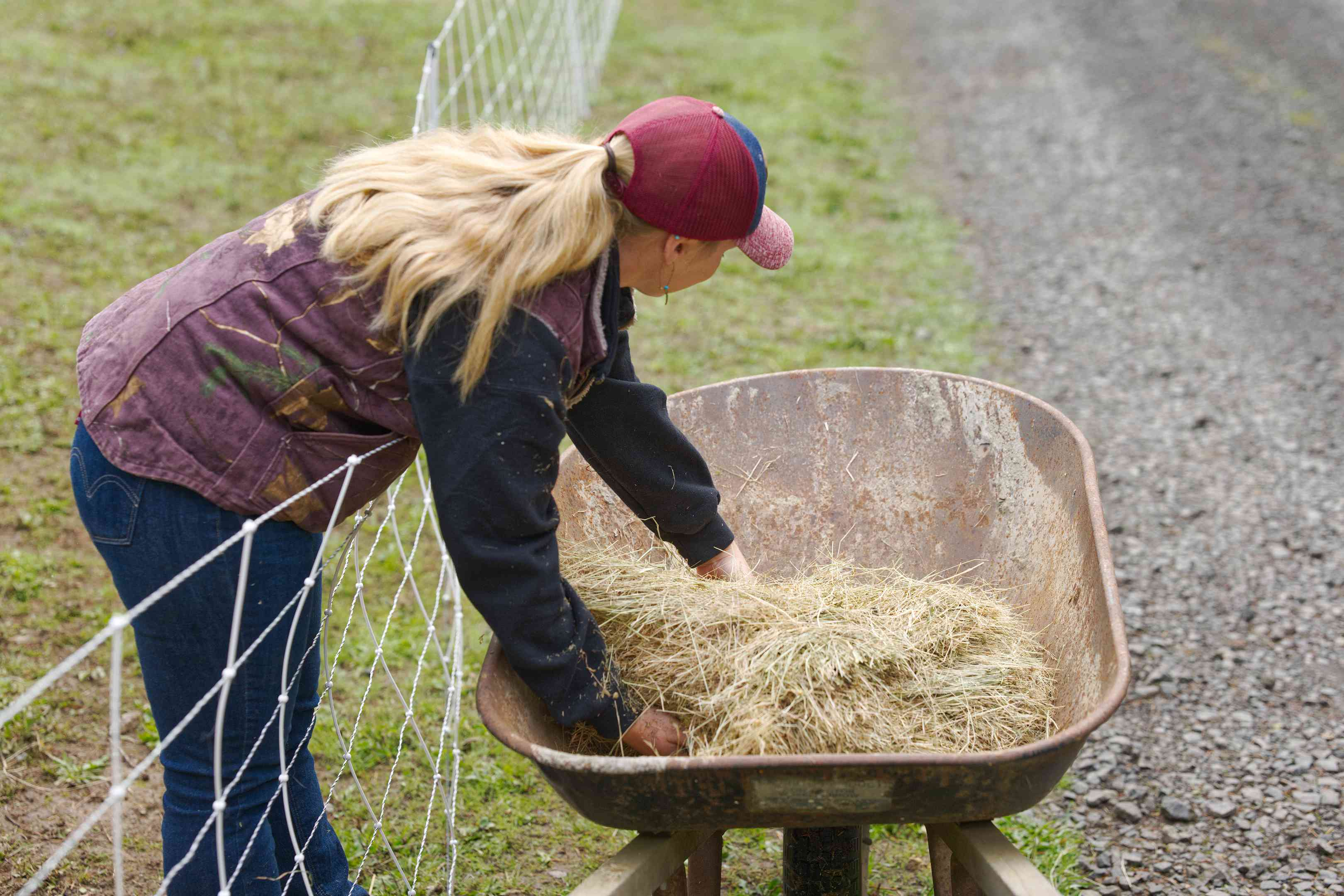 farmer with blonde ponytail scoops hay out of old wheelbarrow next to goat fence