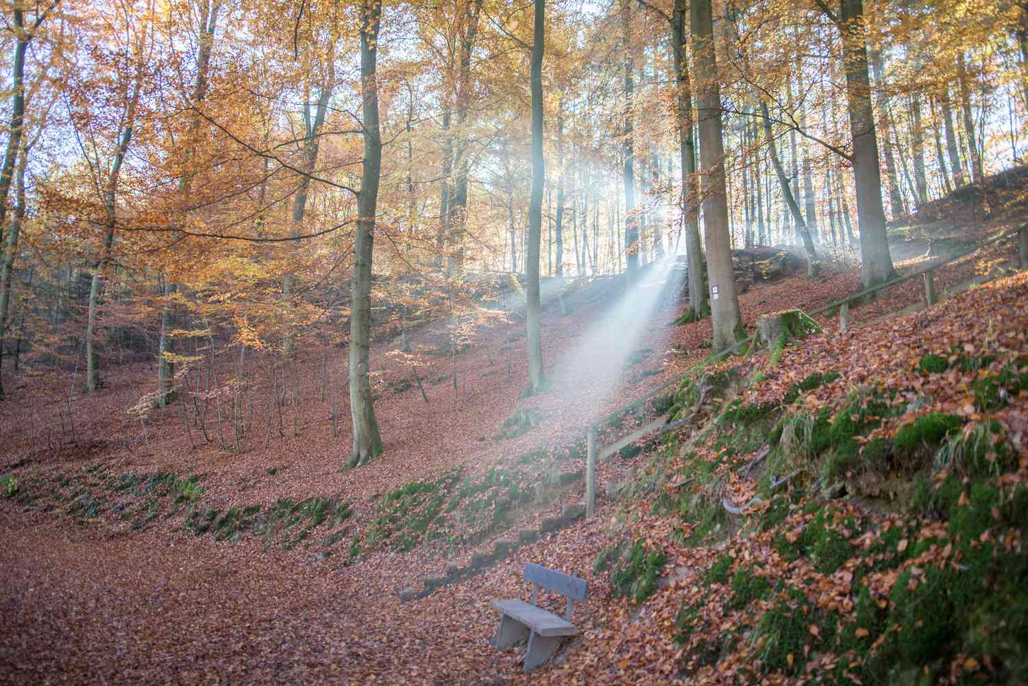 A sunbeam casts light upon an autumnal wooded scene in Mullerthal, Luxembourg
