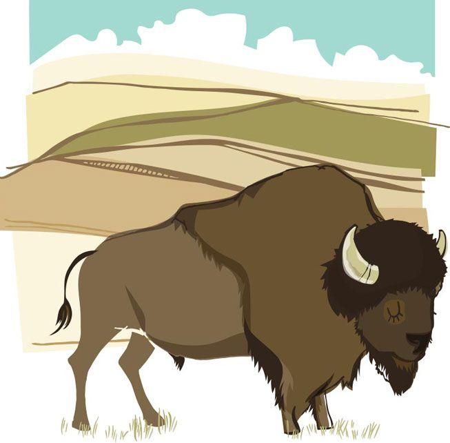 An illustration of a bison