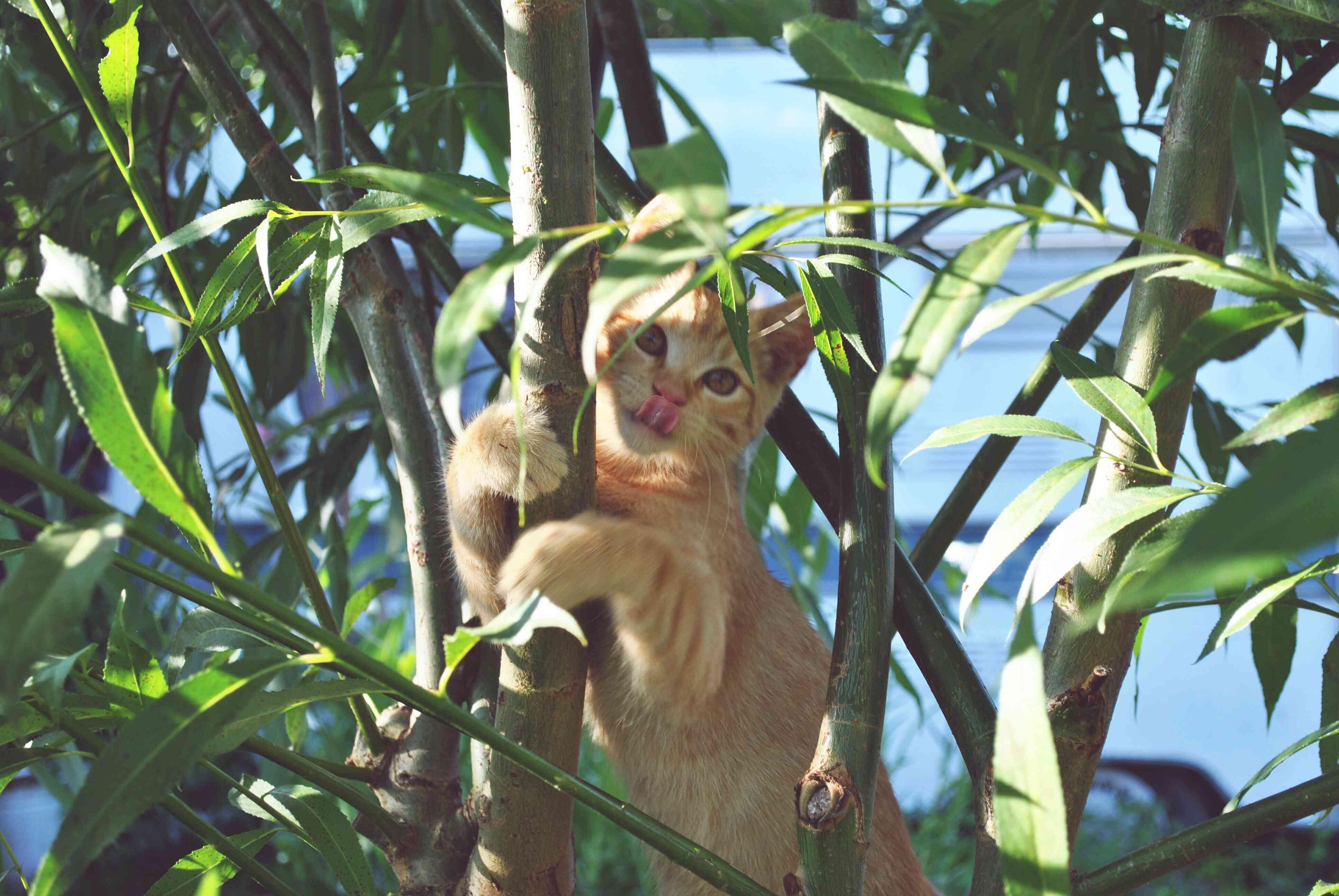 Cat climbing in a tree