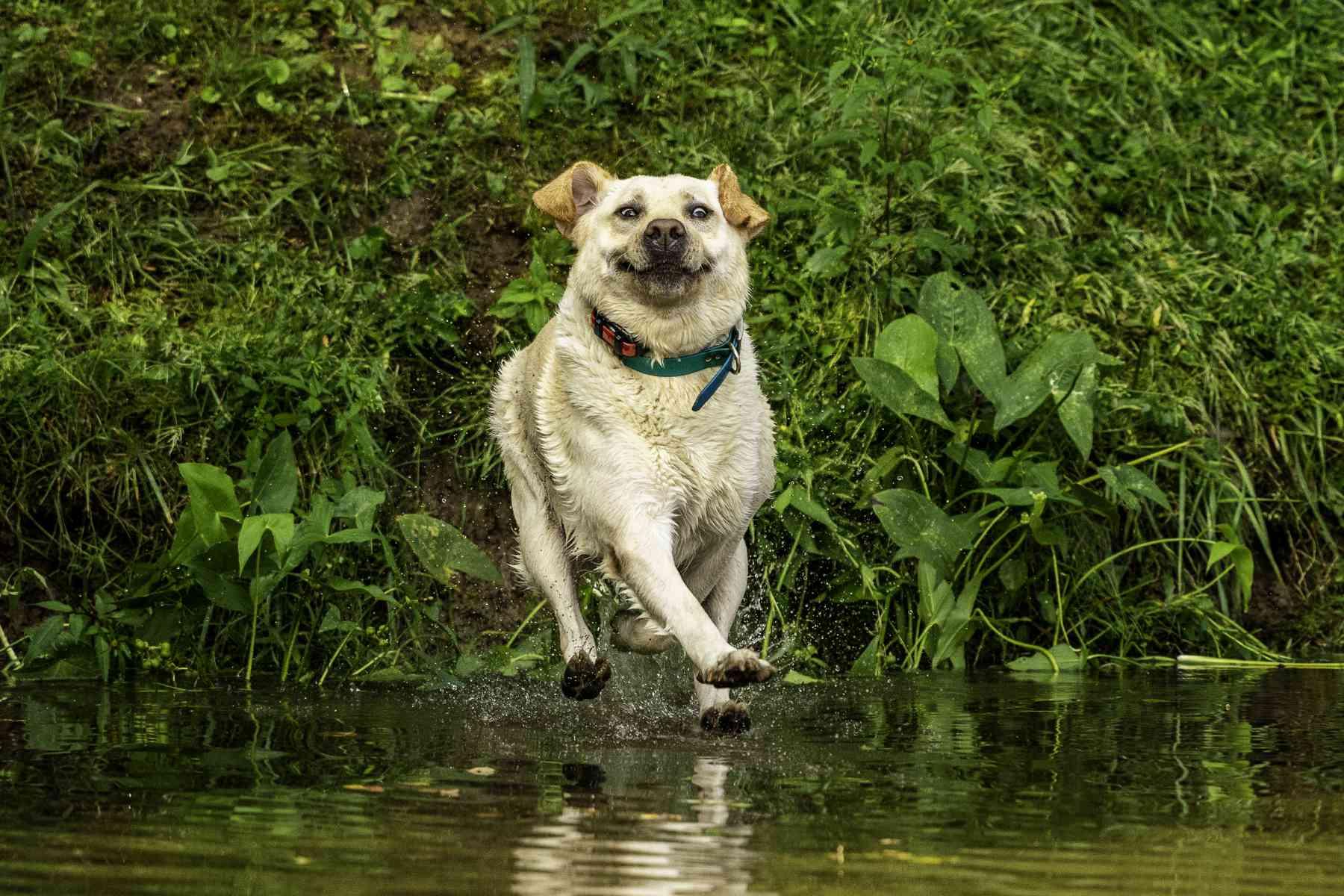 dog running on water