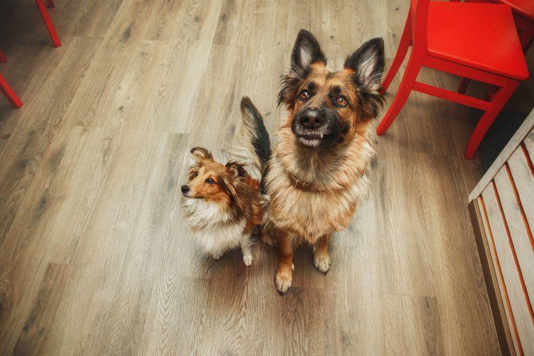 ¿Cómo puedo entrenar a mi perro para que se comporte con correa y cuando tengo invitados?