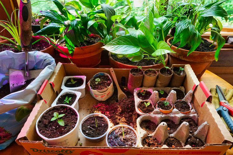 7 macetas de semillas de bricolaje de artículos domésticos comunes para cultivar semillas en interiores