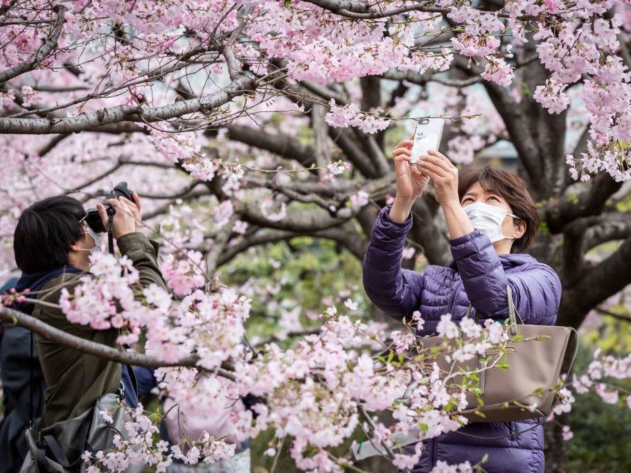 Japan S Cherry Blossoms Bloom Earliest In 1 200 Years