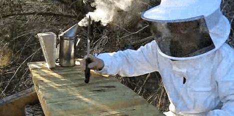 top-bar bee hive photo
