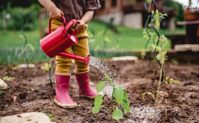 Watering a garden in rain boots
