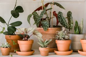 collection of terra cotta plants white wall