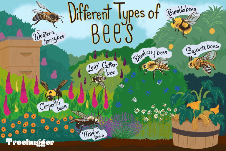 Color illustration showing seven types of bee species in a colorful garden