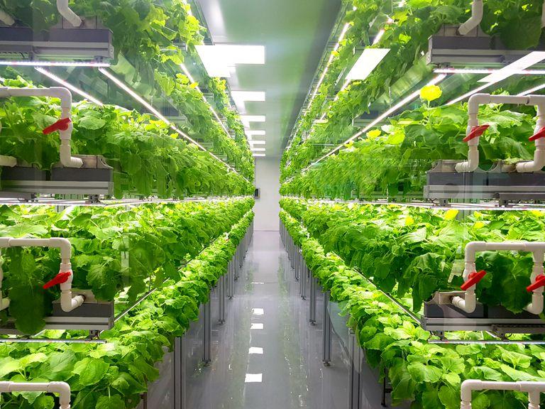 Por qué está despegando el movimiento de agricultura interior