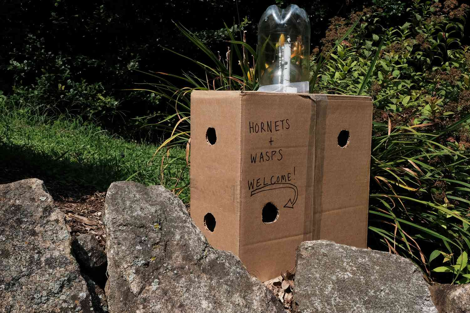 a homemade DIY wasp and hornet trap made out of old soda bottles and cardboard boxes