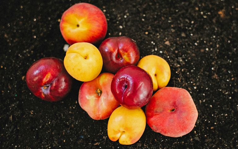 various nectarines and peaches on black soil