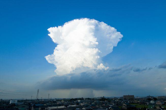 Cumulonimbus clouds have a flat top, somewhat anvil-shaped.