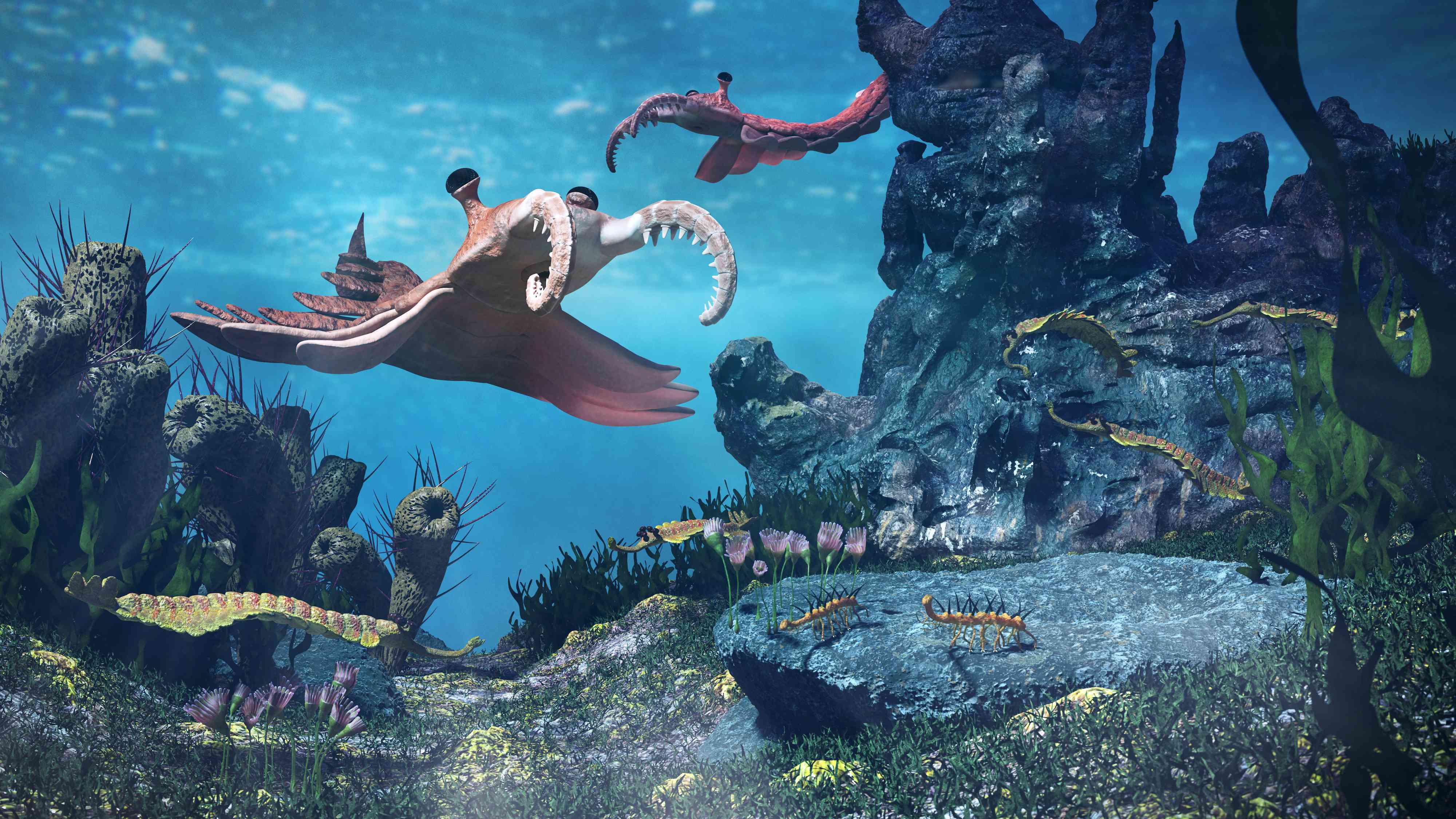 Cambrian wildlife, including Anomalocaris