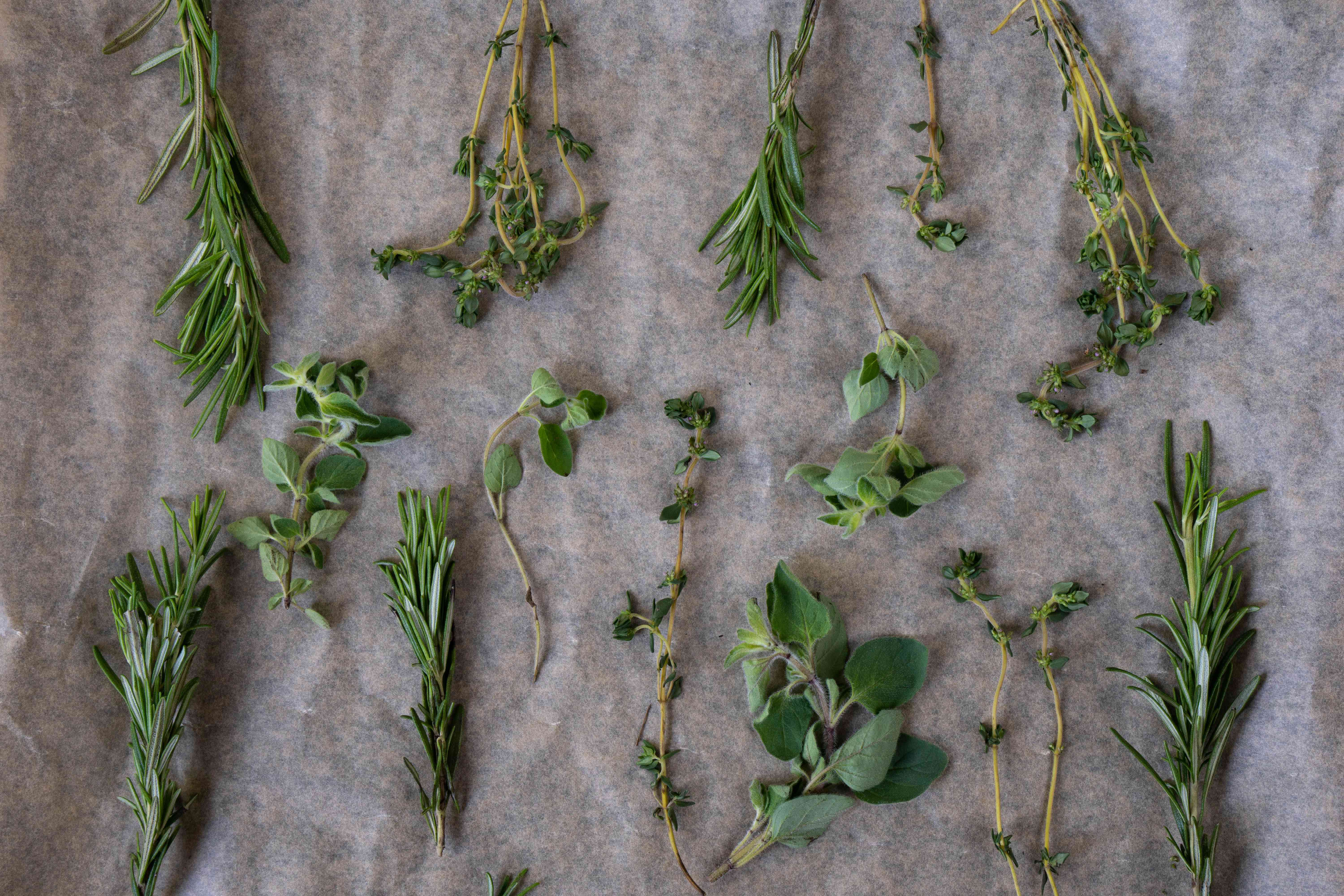 various herbs laid on parchment paper on baking sheet to be dried in oven