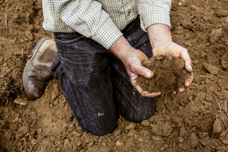 High angle close up of farmer kneeling on field, holding brown soil