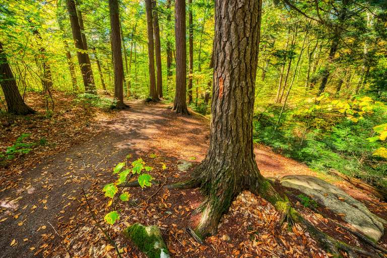 Hardwood trees in a forest during the day.