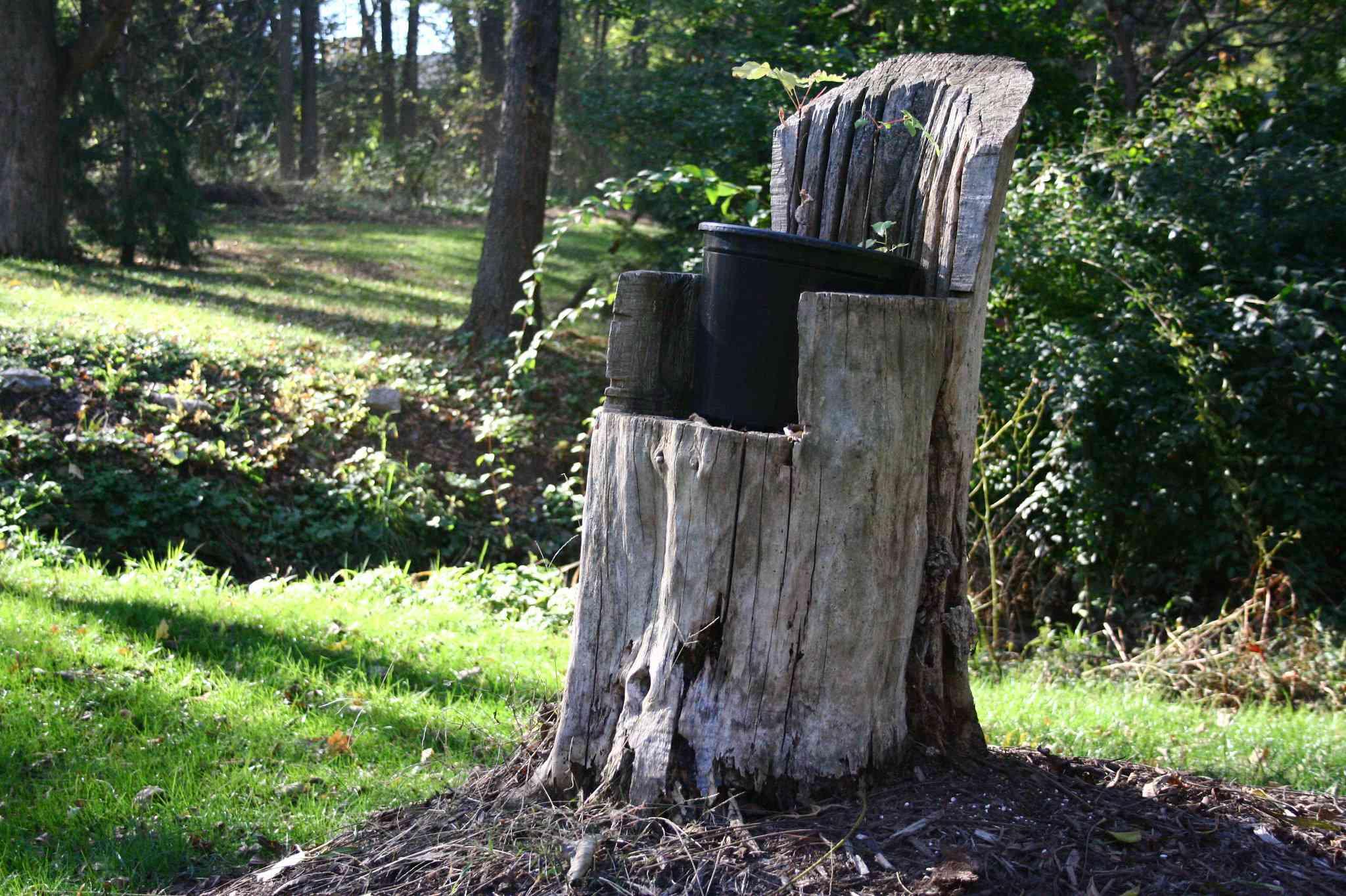 Tree stump chair holding a flower pot