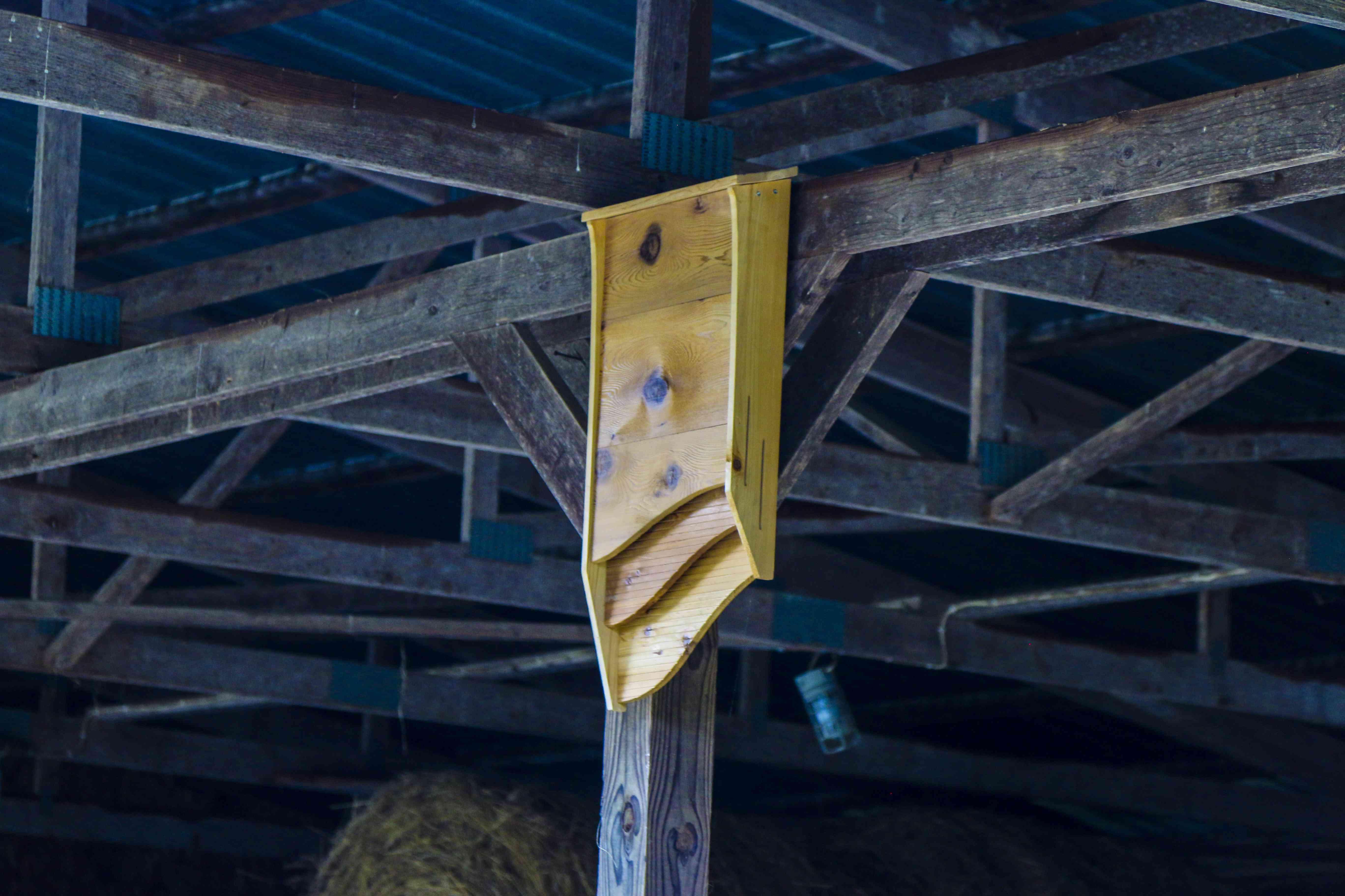 BatBNB bat house in a barn