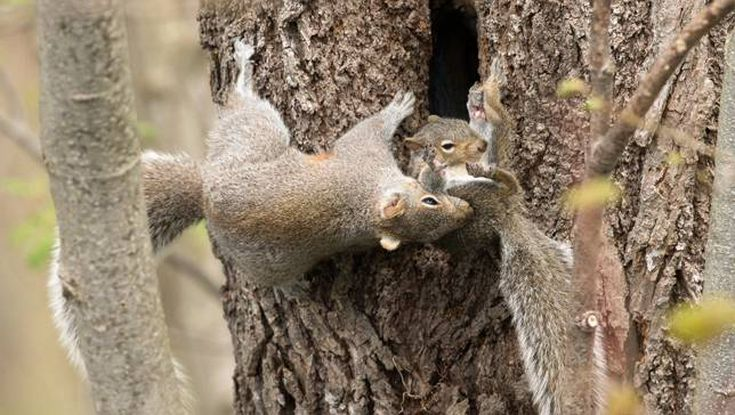 Photos Of Mother Squirrel Moving Her Babies Are Both Endearing And Empowering
