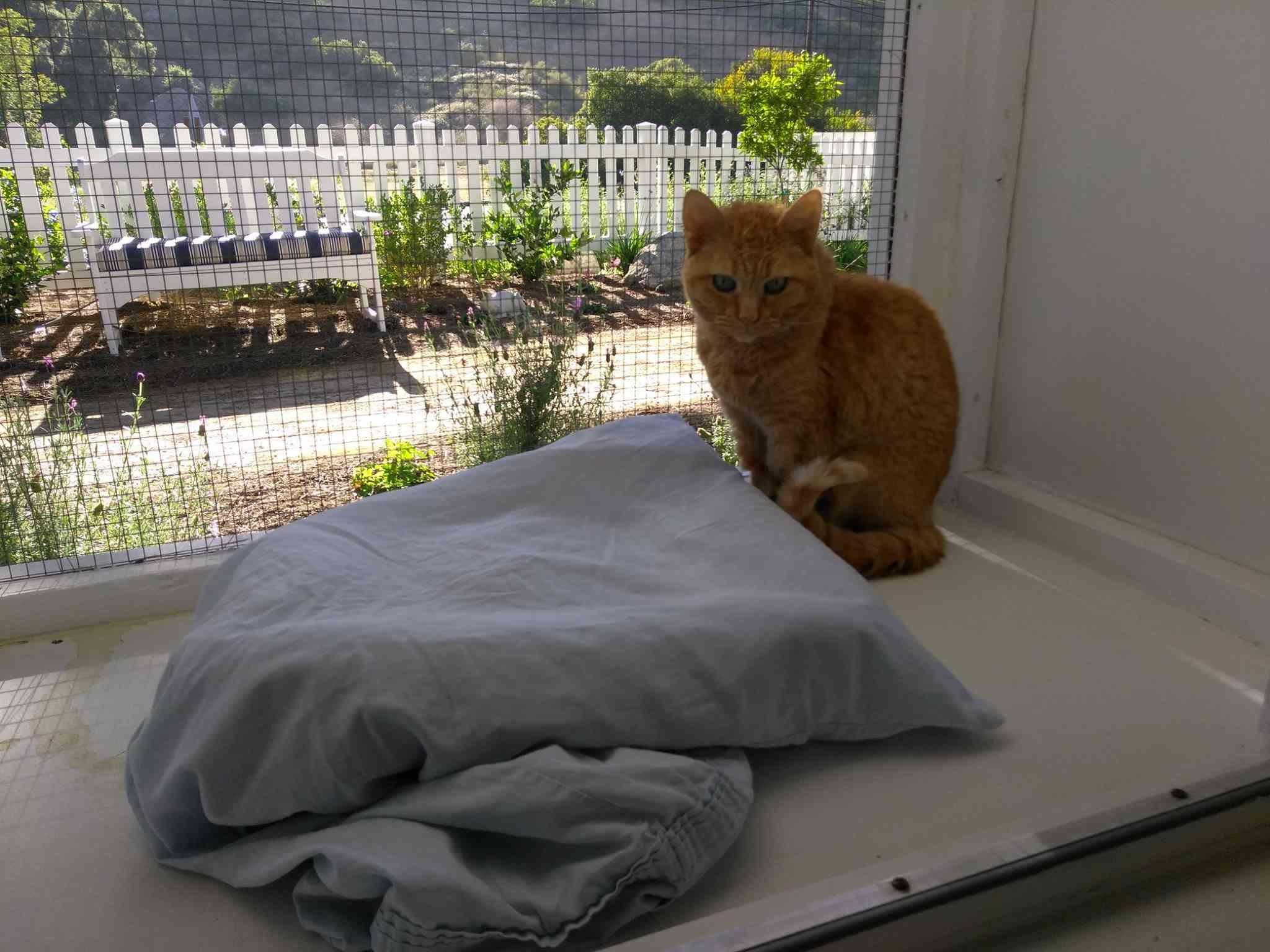 cat in enclosed patio