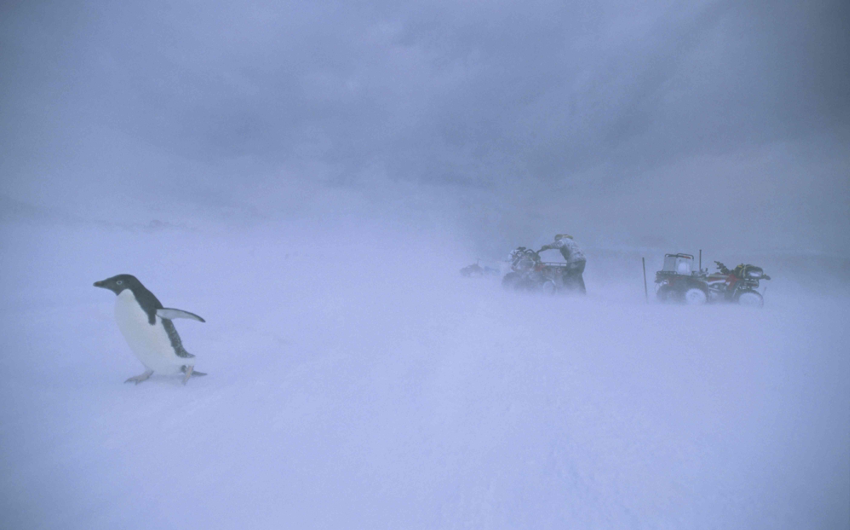 Humans and penguin struggling in Antarctic snowdrift