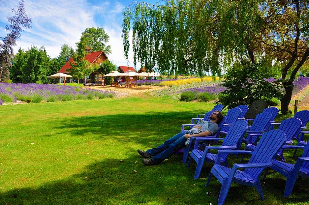 Lavender Capital of North America: Relaxing in adirondacks at Purple Haze