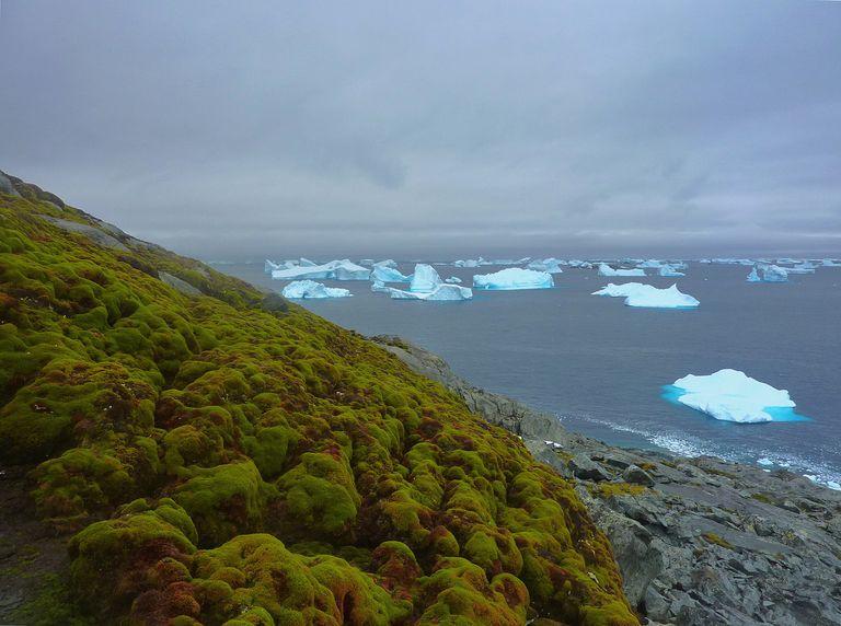 El calentamiento global está haciendo que la Antártida vuelva a ser verde, y es impresionante