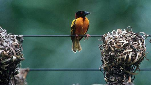 bird nest hanging off a wire