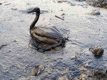 Oil-Spill-Bird.jpg