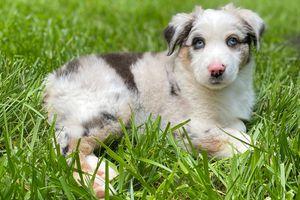 foster puppy Evie