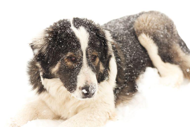 Las leyes protegen a las mascotas en condiciones climáticas adversas